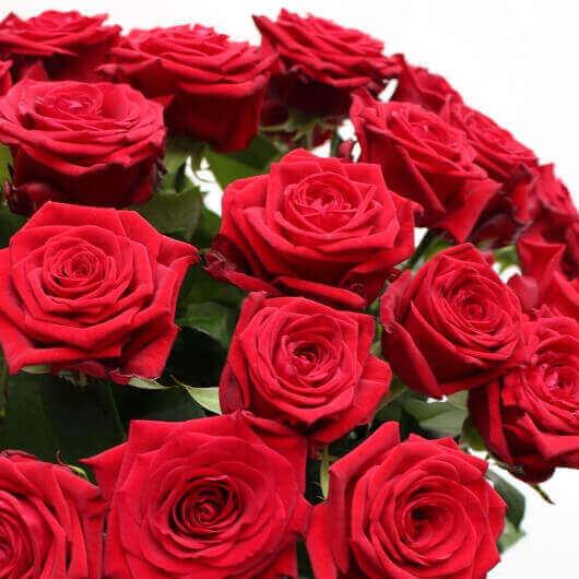 rote rosen blumenlieferung durch blumenladen in düsseldorf