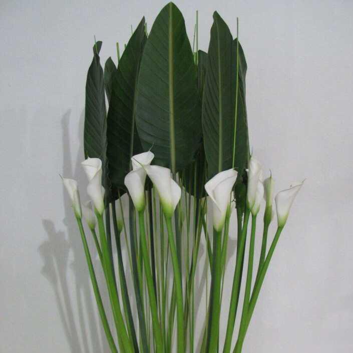 Blumen - Dekoration mit Calla-Blüten