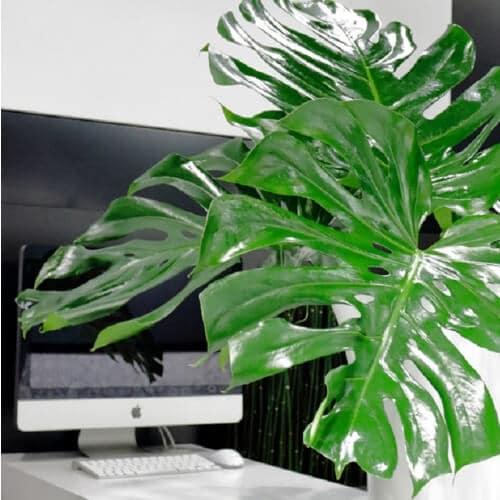 Dekoration mit Monstera-Blättern