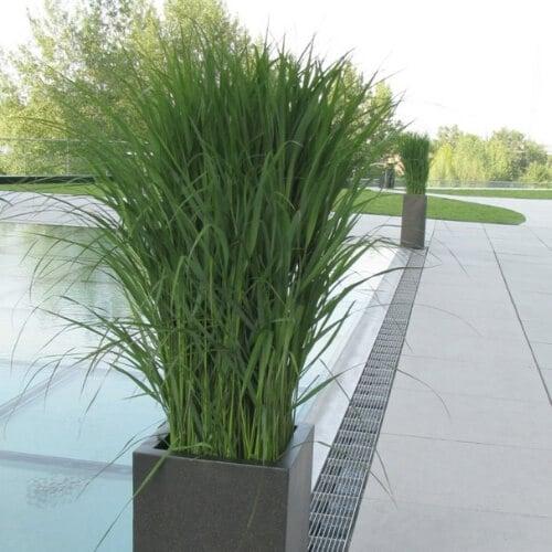 Gräser - Event - Dekoration