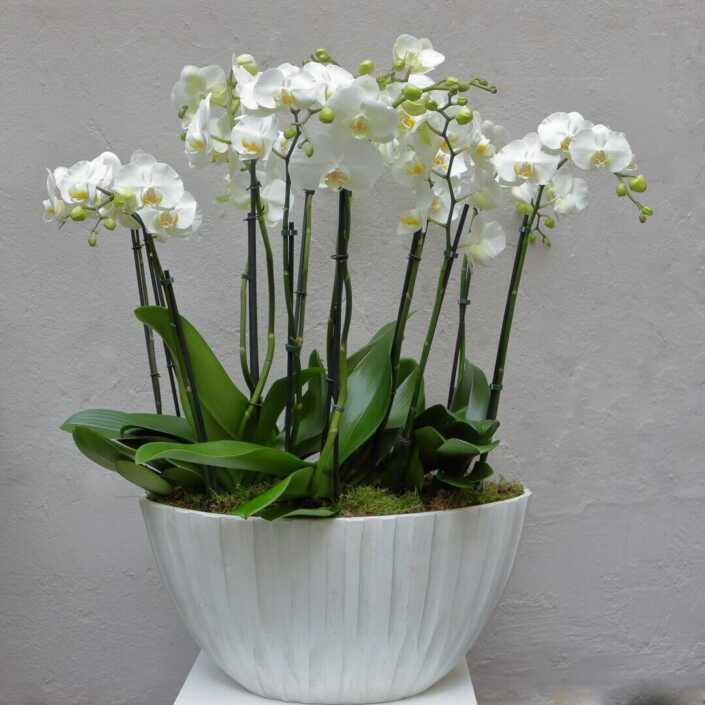 Orchideen - Schale