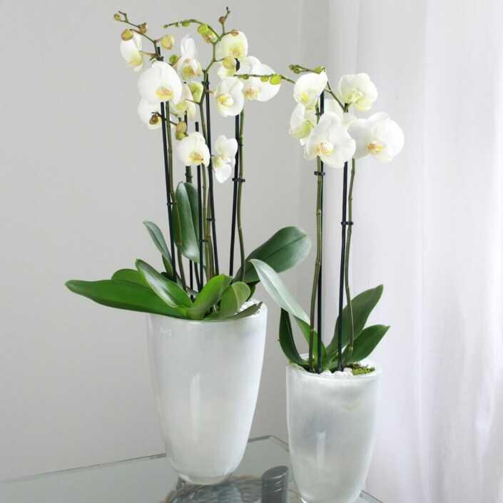 Orchideen für eine Messe - Veranstaltung