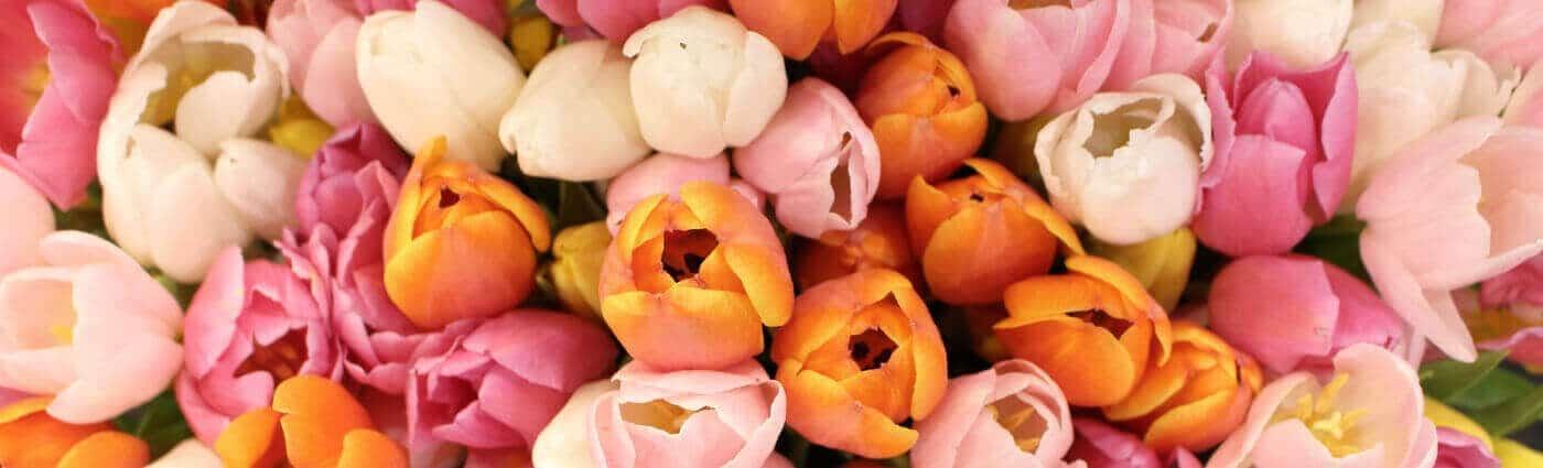 Tulpen Düsseldorf