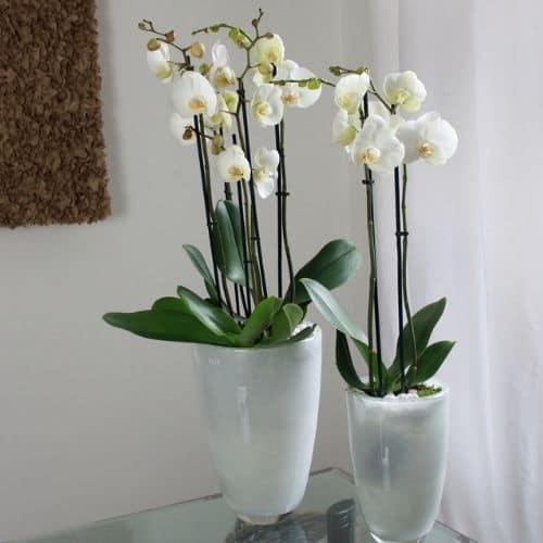 Büro-Pflanzen-Düsseldorf-Bepflanzung-Orichideen