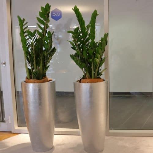 Büropflanzen-Düsseldorf