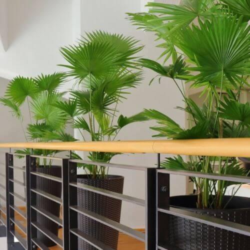 Büropflanzen Düsseldorf Büro Pflanze - Pflanzen