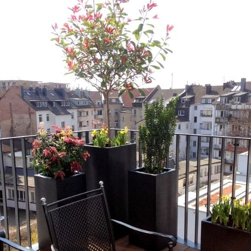 Balkon-Bepflanzung-Düsseldorf-5