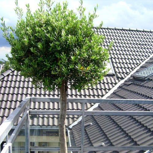 Balkon-Bepflanzungen-in-Düsseldorf-5