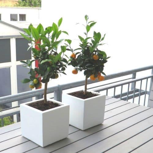 Balkon-Bepflanzungen-in-Düsseldorf