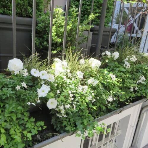 Balkon-Terrasse-Bepflanzung-Düsseldorf