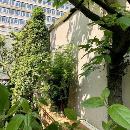 Balkon-und-Dachgarten-Düsseldorf