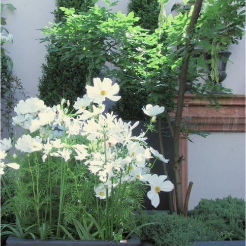 Cosmen-Dachgarten-Blumenbinderei-Lehmann
