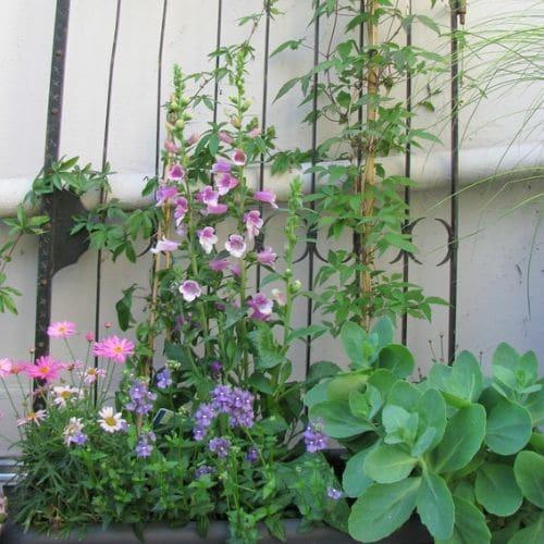 Dachgarten-Blumenbinderei-Lehmann