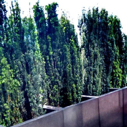 Dachterrasse-Düsseldorf-Bepflanzung-2