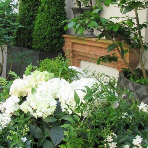 Hortensien-Dachgarten-Blumenbinderei-Lehmann