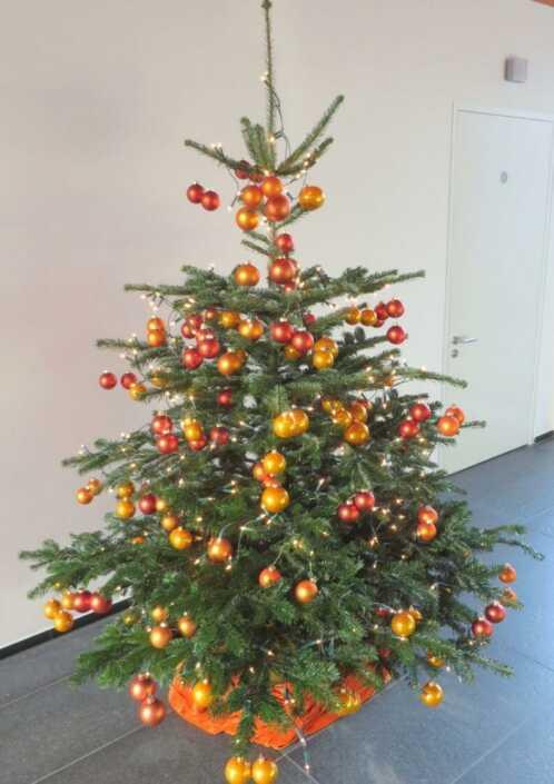 Nordmanntanne-Weihanchtsbaum-orange-Düsseldorf