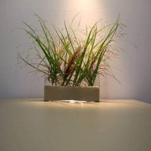 Gräser Deko 3