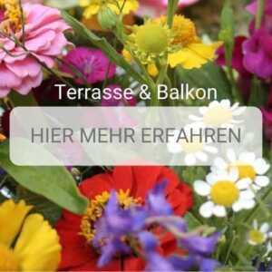 Blumen Düsseldorf - Terrasse und Balkon