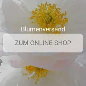 Blumenversand Düsseldorf - Blumen in Düsseldorf verschicken