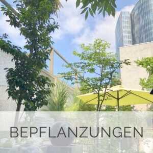 Terrassen - Bepflanzung Düsseldorf